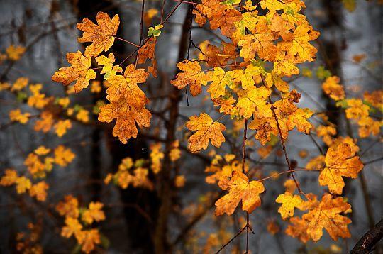 thumb Jour d automne sous la pluie -11